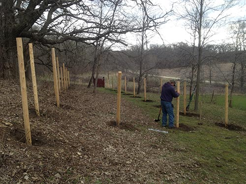 Installing fence posts by hand at for pasture rotation.