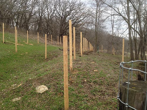 Fence posts ready for fencing to be stretched for pasture rotation.