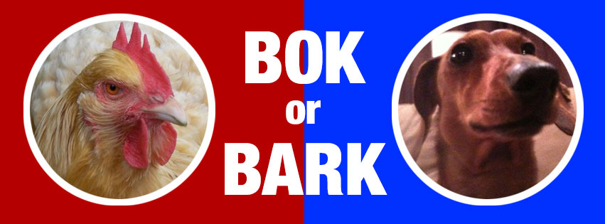 Chicken verses dog in barnyard election.
